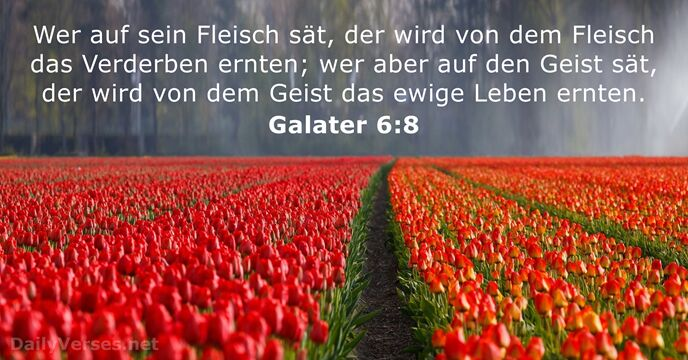 Galater 6:8