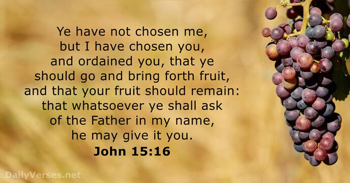 Ye have not chosen me, but I have chosen you, and ordained… John 15:16