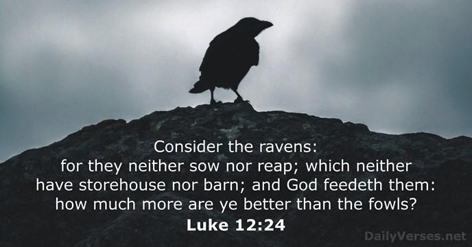 Luke 12:24