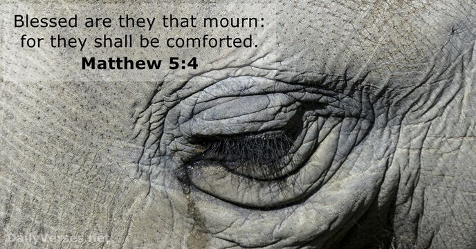 Blessed are they that mourn: for they shall be comforted. Matthew 5:4