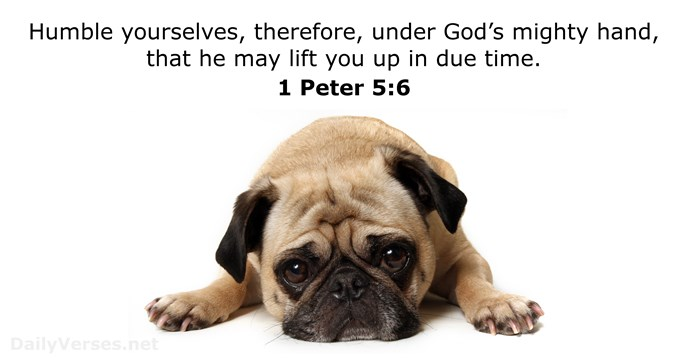 1 Peter 5 6 Bible Verse Of The Day Dailyverses Net