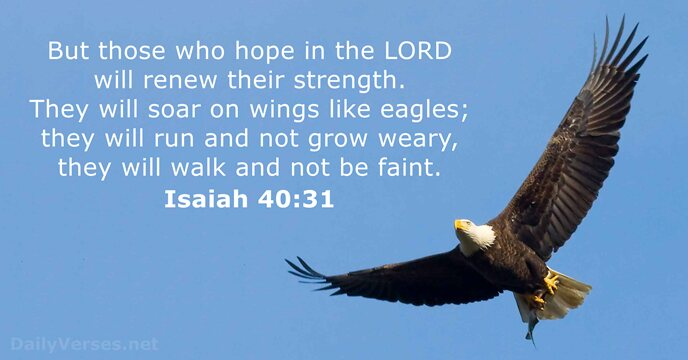 Image result for they will soar on wings like eagles