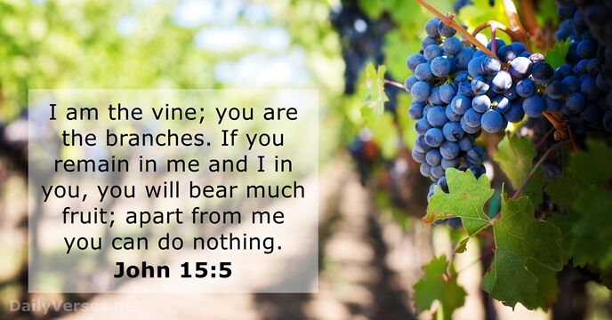 Image result for if you remain in me and i in you you will bear much fruit kjv