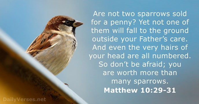 Matthew 1029 31 English Standard Version Bible Verse Of The Day