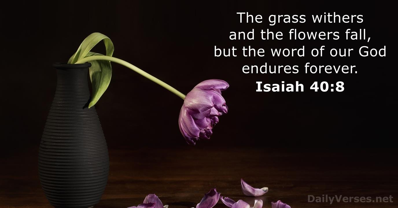 Random Bible Verse with Picture - DailyVerses.net