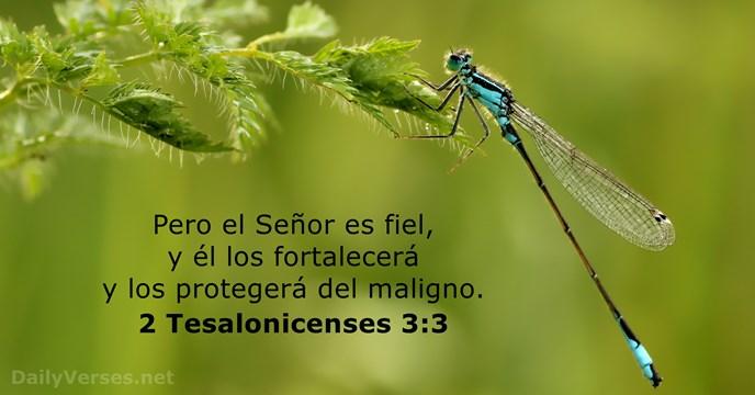 24 Versículos De La Biblia Sobre La Seguridad Dailyversesnet
