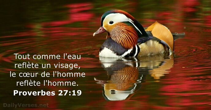 Proverbes 27:19