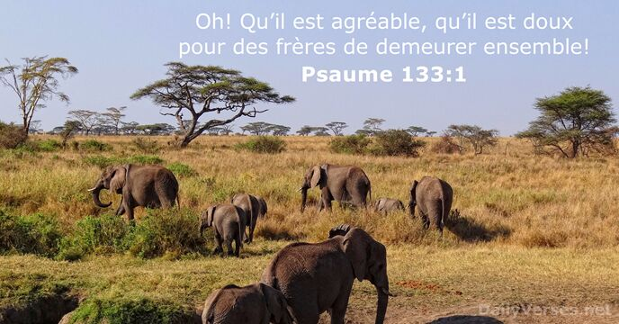 Psaumes 133:1