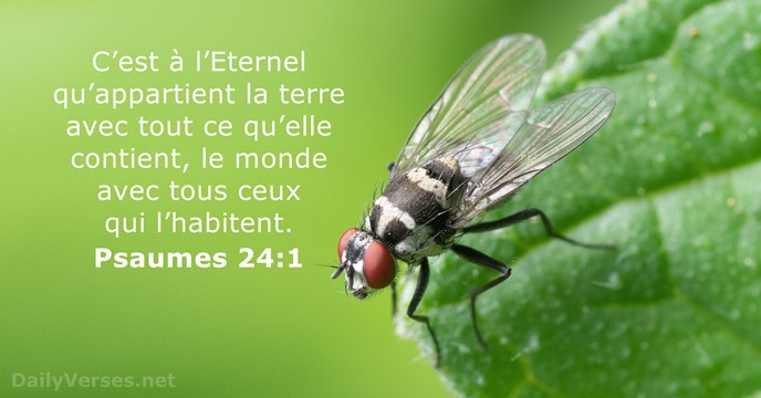 Psaumes 24:1