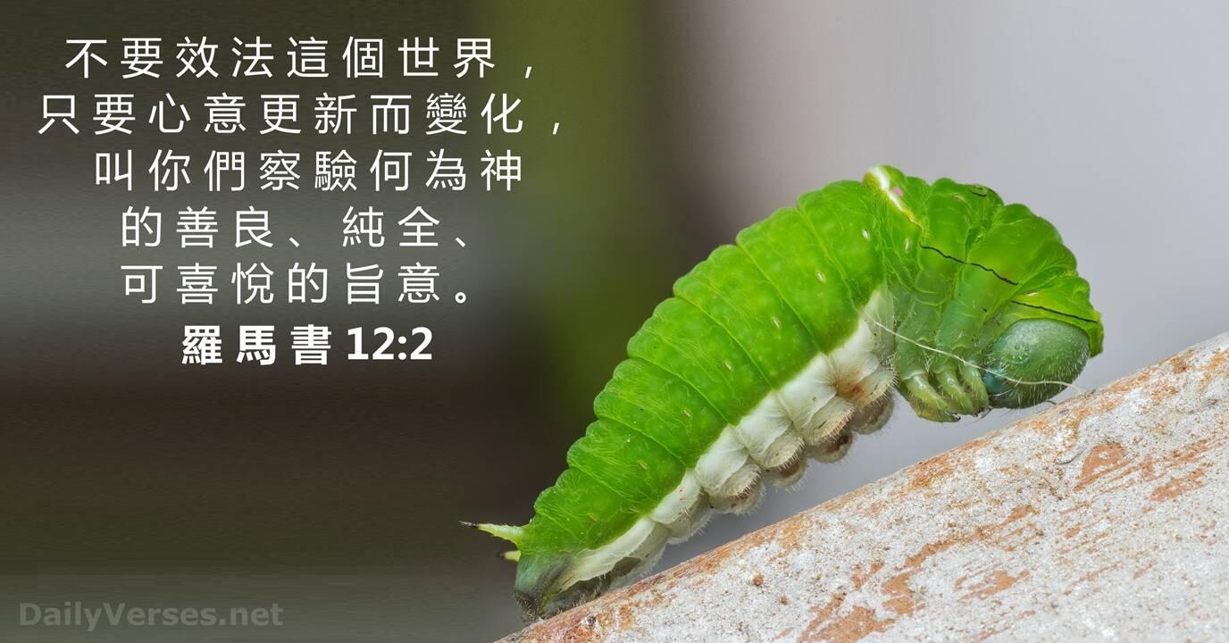 羅馬書12:2 - 每日聖經金句- DailyVerses.net